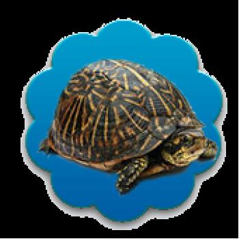 Товары для рептилий