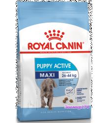 Royal Canin (Роял канин) Maxi JUNIOR Active Корм для щенков с высокими энергетическими потребностями до 15 месяцев