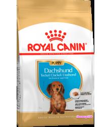 Royal Canin (Роял канин) Dachshund Puppy  Корм для щенков породы Такса до 10 месяцев